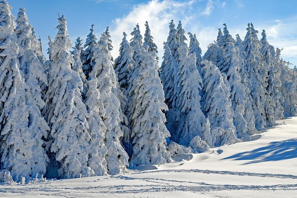 sneeuw in de bomen